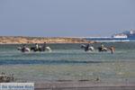 Naxos stad | Eiland Naxos | Griekenland | foto 17 - Foto van De Griekse Gids